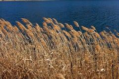 Weed on the lake in Kawaguchiko, Japan Stock Images