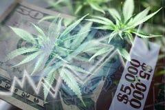 Weed With Money Representing Marijuana Stocks royalty free stock image
