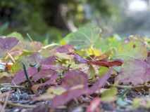 Weed-plant leaves cover the soil of a countryside. Colored leave. S in shades from purple to bright green. Blurred vegetation background stock photos