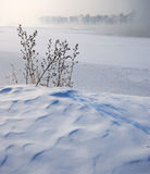 Weed on snow field. The strength of the life - In the white icy world, a bundle of the weed are standing still in the frozen river bank, showing the gentle Royalty Free Stock Photo