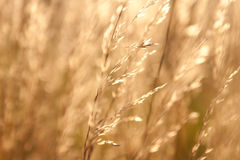 Weed in sunlight Royalty Free Stock Images