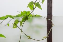Weed vines Stock Photos