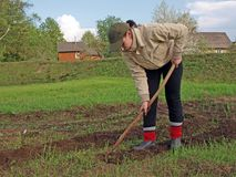 Weeder Stock Images