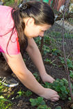Weeding молодой женщины Стоковая Фотография RF