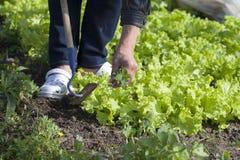 Weeding. Stock Photo