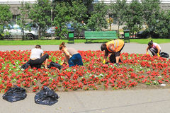 Weeding and caring for urban flowerbed. KALININGRAD, RUSSIA — JULY 7, 2014: Weeding and caring for urban flowerbed Royalty Free Stock Photo