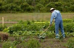 Weeding the garden Stock Photo
