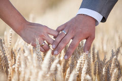 Weeding rings. Hands with weeding rings on the field Royalty Free Stock Image
