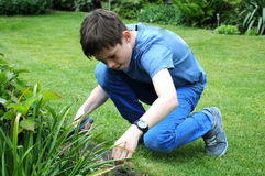 Weeding. Teenager boy weeding the beds in the garden Royalty Free Stock Images