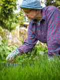 Weeding. Woman weeding in the garden and she use protective gloves Stock Photos