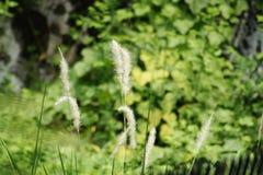 weeds Fotografía de archivo libre de regalías