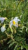 weeds Fotos de archivo libres de regalías