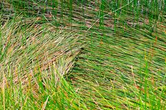 weeds photos stock