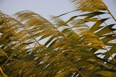 Weeds Stock Image