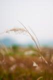 weeds image libre de droits