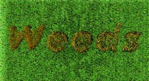 weeds Foto de archivo libre de regalías