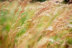 weeds royaltyfria bilder