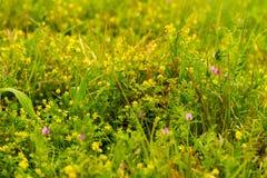 weeds photographie stock