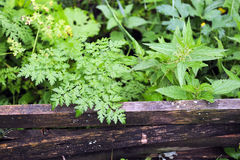 weeds images stock