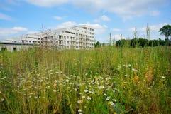 weeds photos libres de droits