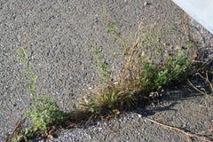 Weeds Crack Granite Blocks Royalty Free Stock Images