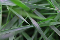 Weeds. Excellent grass to park your home Stock Photos
