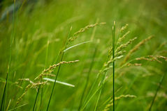 Weeds in field. Details of weeds in green field Royalty Free Stock Images