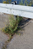 Weeds Flowers Crack Guardrail Stock Photography