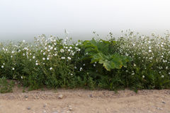 Weeds in the fog Royalty Free Stock Images