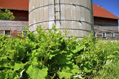 Weeds and foliage grow around an old silo and barn Royalty Free Stock Photography
