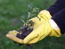 Weeds in the garden Stock Image