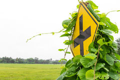 Weeds grew traffic signs Stock Image