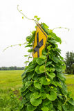 Weeds grew traffic signs Stock Photography