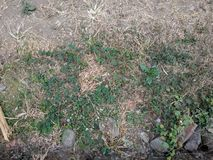Weeds on the ground background stock photo