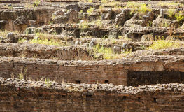 Weeds Growing From Broken Walls in Coliseum Royalty Free Stock Photography