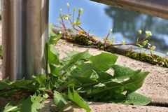 Weeds Growing Through Cement Cracks On A Balcony stock photo
