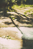 Weeds growing through crack in pavement. Toned picture.  stock image