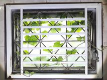 Weeds into the house. Through the glass window gap. stock photo
