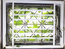 Weeds into the house. Through the glass window gap. stock images