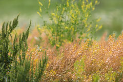Weeds. Horizontal photo of weeds in a pasture in Kansas royalty free stock images