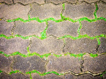 Weeds line. Of a brick patterned sidewalk Royalty Free Stock Photos