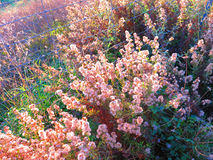 Weeds in morning sunshine Royalty Free Stock Photos