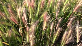 Weeds moving in the wind stock footage