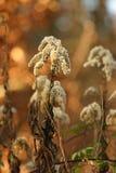 weeds imagens de stock