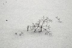 Weeds partially covered by snow Royalty Free Stock Photos