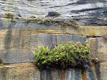 Weeds on Sandstone Cliff Royalty Free Stock Images