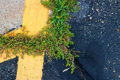 Weeds in seam between asphalt and concrete along paint line stock image