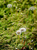 Weeds in the Summer Stock Photography