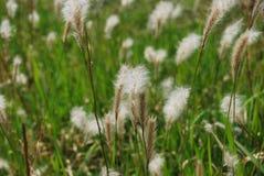 Weeds Stock Photos