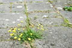 Weeds and tiles Stock Images